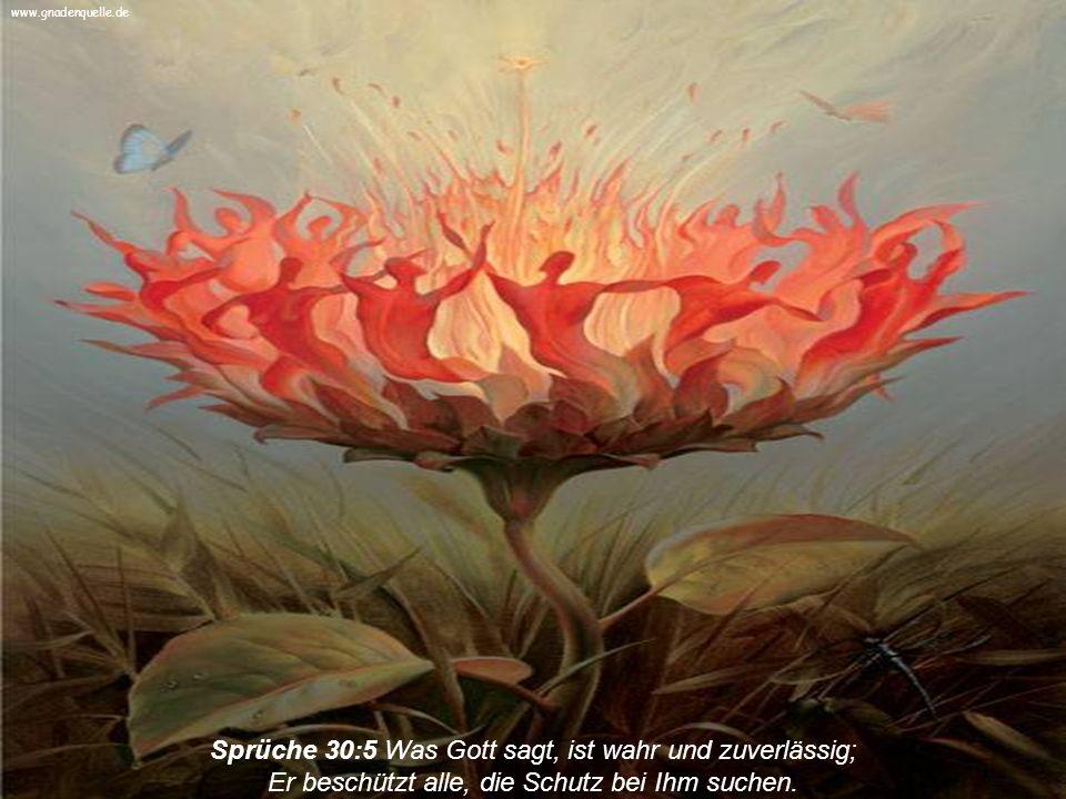 Galater 6:7 Denn was ein Mensch sät, das wird er auch ernten. www.gnadenquelle.de