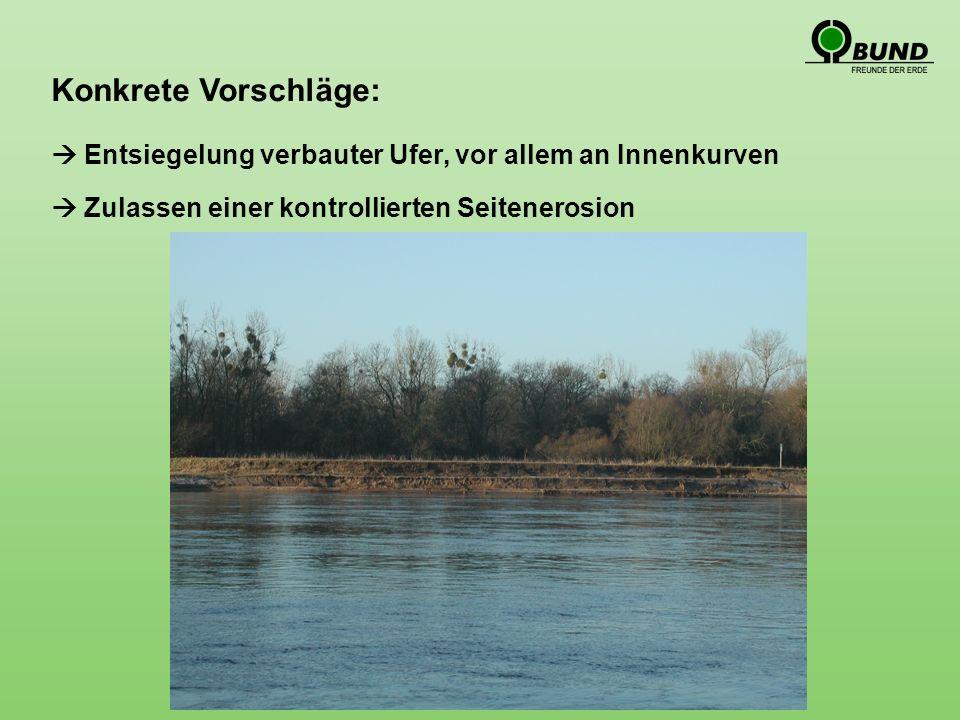 Konkrete Vorschläge: Entsiegelung verbauter Ufer, vor allem an Innenkurven Zulassen einer kontrollierten Seitenerosion