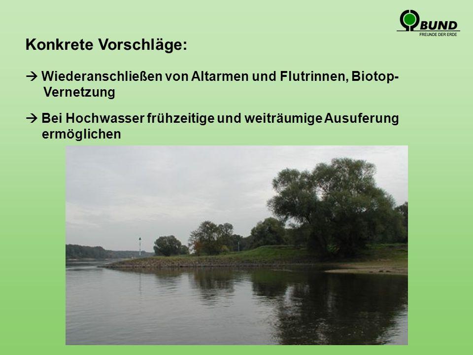 Konkrete Vorschläge: Bei Hochwasser frühzeitige und weiträumige Ausuferung ermöglichen Wiederanschließen von Altarmen und Flutrinnen, Biotop- Vernetzung