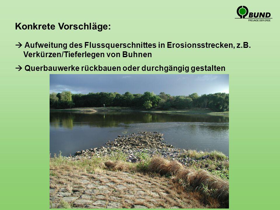 Konkrete Vorschläge: Aufweitung des Flussquerschnittes in Erosionsstrecken, z.B.