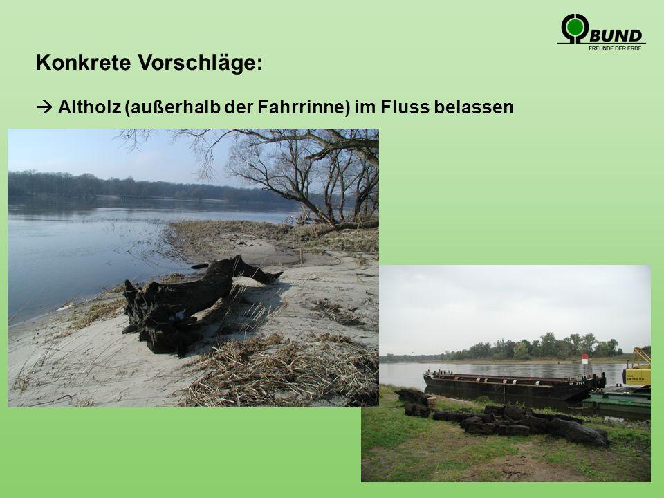 Konkrete Vorschläge: Altholz (außerhalb der Fahrrinne) im Fluss belassen