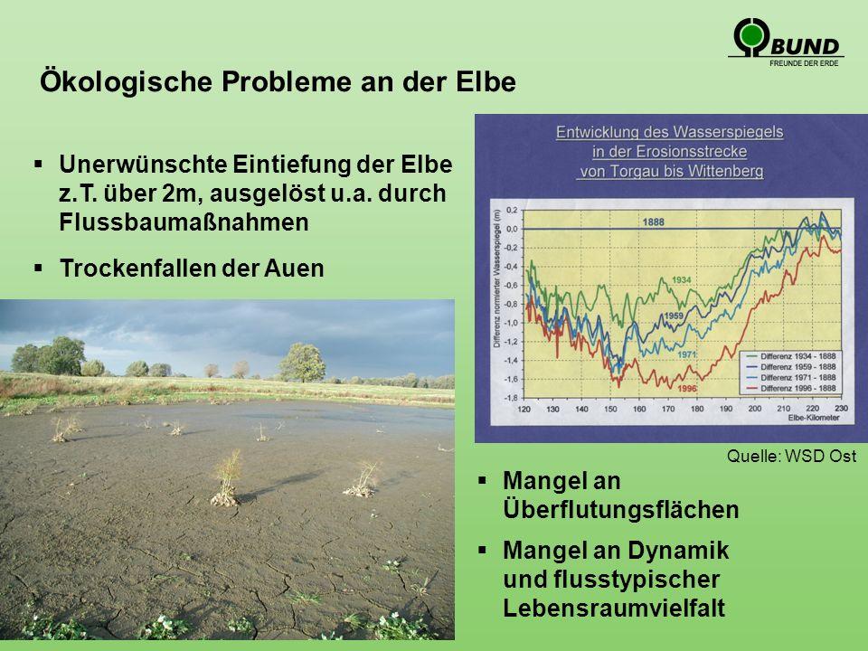 WRRL: Guter ökologischer Zustand Wie schaffen wir mehr Flussdynamik, mehr Lebensraumvielfalt.