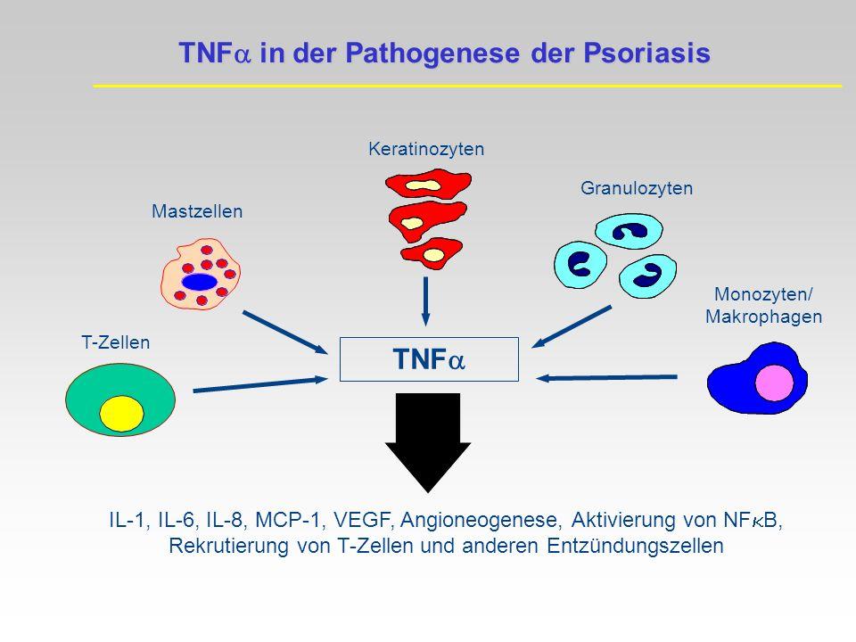 Mastzellen Keratinozyten Granulozyten T-Zellen Monozyten/ Makrophagen TNF IL-1, IL-6, IL-8, MCP-1, VEGF, Angioneogenese, Aktivierung von NF B, Rekrutierung von T-Zellen und anderen Entzündungszellen TNF in der Pathogenese der Psoriasis