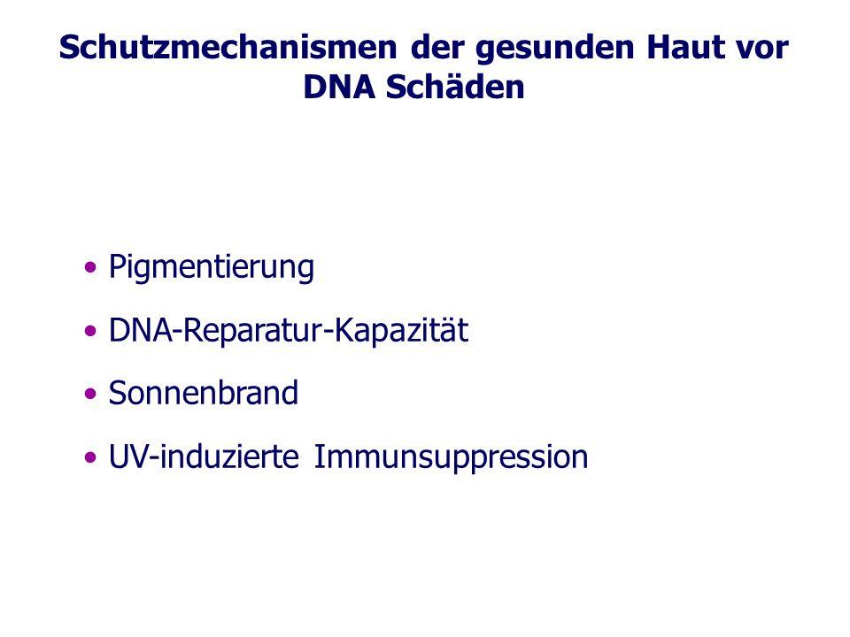 Schutzmechanismen der gesunden Haut vor DNA Schäden Pigmentierung DNA-Reparatur-Kapazität Sonnenbrand UV-induzierte Immunsuppression