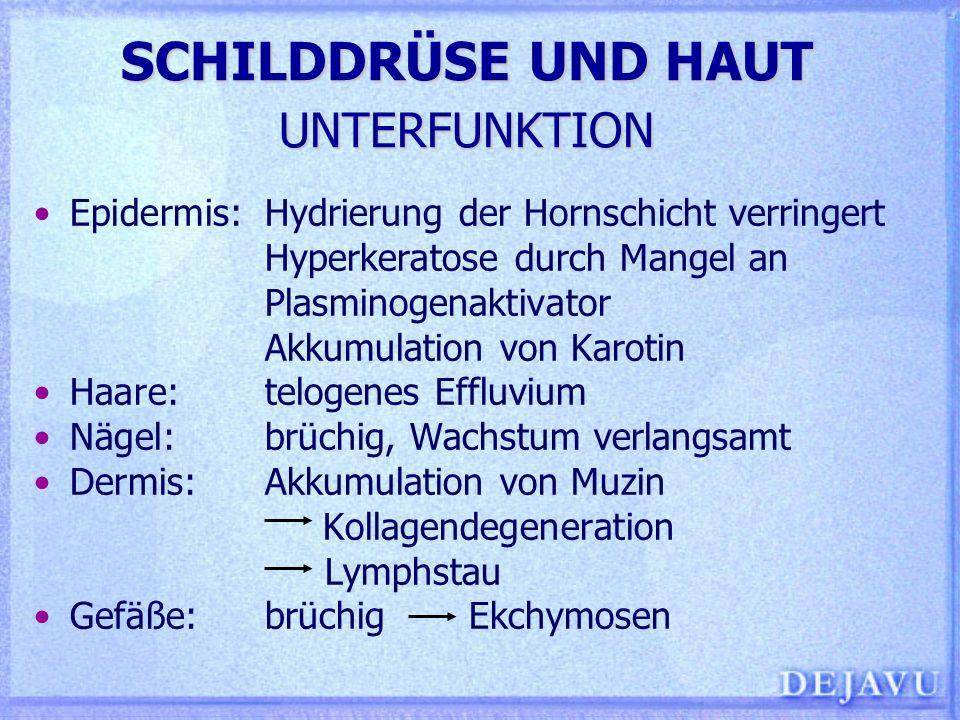 SCHILDDRÜSE UND HAUT UNTERFUNKTION Epidermis:Hydrierung der Hornschicht verringert Hyperkeratose durch Mangel an Plasminogenaktivator Akkumulation von