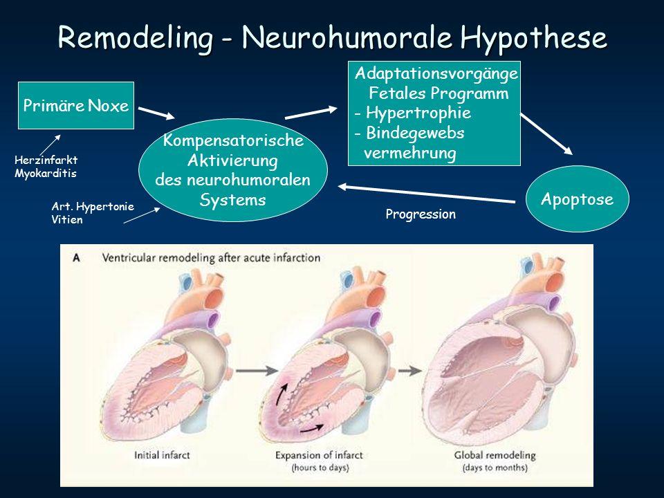 Remodeling - Neurohumorale Hypothese Primäre Noxe Kompensatorische Aktivierung des neurohumoralen Systems Adaptationsvorgänge Fetales Programm - Hyper