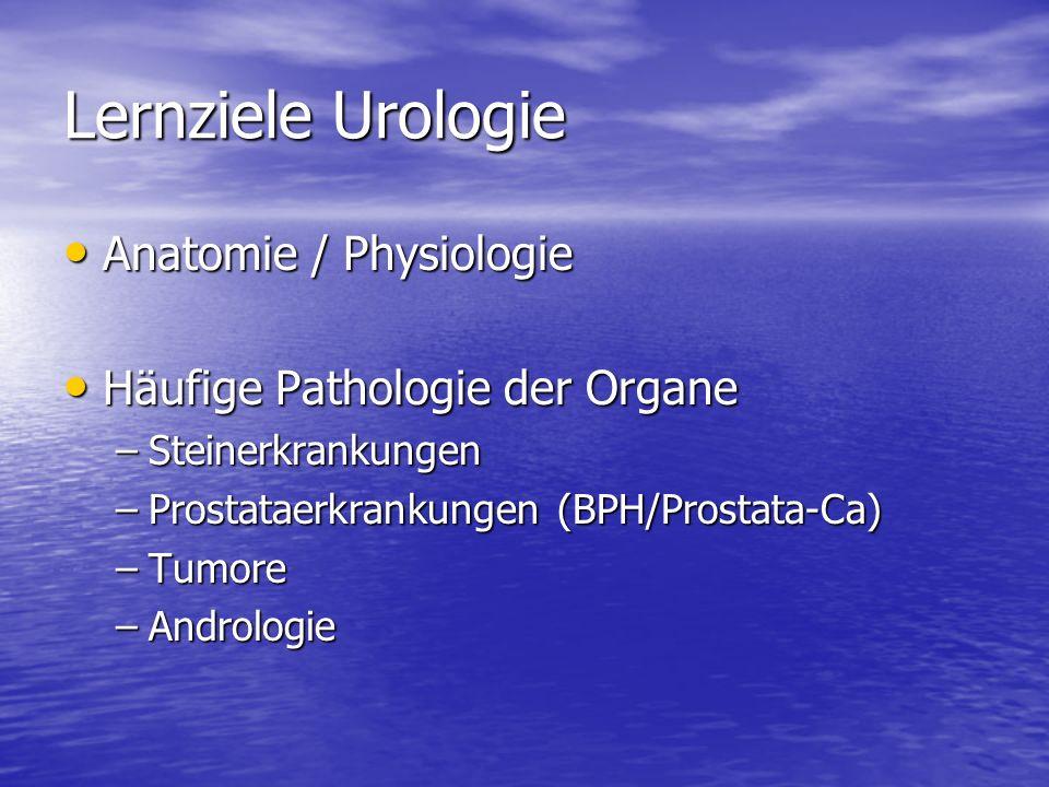 Lernziele Urologie Anatomie / Physiologie Anatomie / Physiologie Häufige Pathologie der Organe Häufige Pathologie der Organe –Steinerkrankungen –Prost