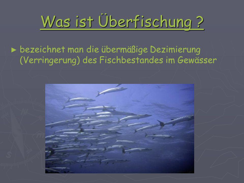 Einfluß der Überfischung auf das Ökosystem Bisher keine Ausrottung von kommerziellen Arten durch Fischerei Bisher keine Ausrottung von kommerziellen Arten durch Fischerei Beinahe und lokale Ausrottungen nehmen zu Beinahe und lokale Ausrottungen nehmen zu Zahlenverhältnis der Arten zueinander ist stark verändert Zahlenverhältnis der Arten zueinander ist stark verändert