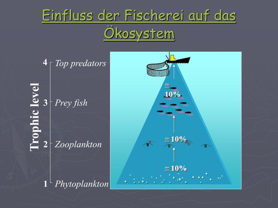 Folgen für die Industrie Fisch-Firmen gehen Pleite Fisch-Firmen gehen Pleite Meist wird Fischersatz hergestellt (z.B Shrimps) Meist wird Fischersatz hergestellt (z.B Shrimps) Wirtschaftliche verluste ca.