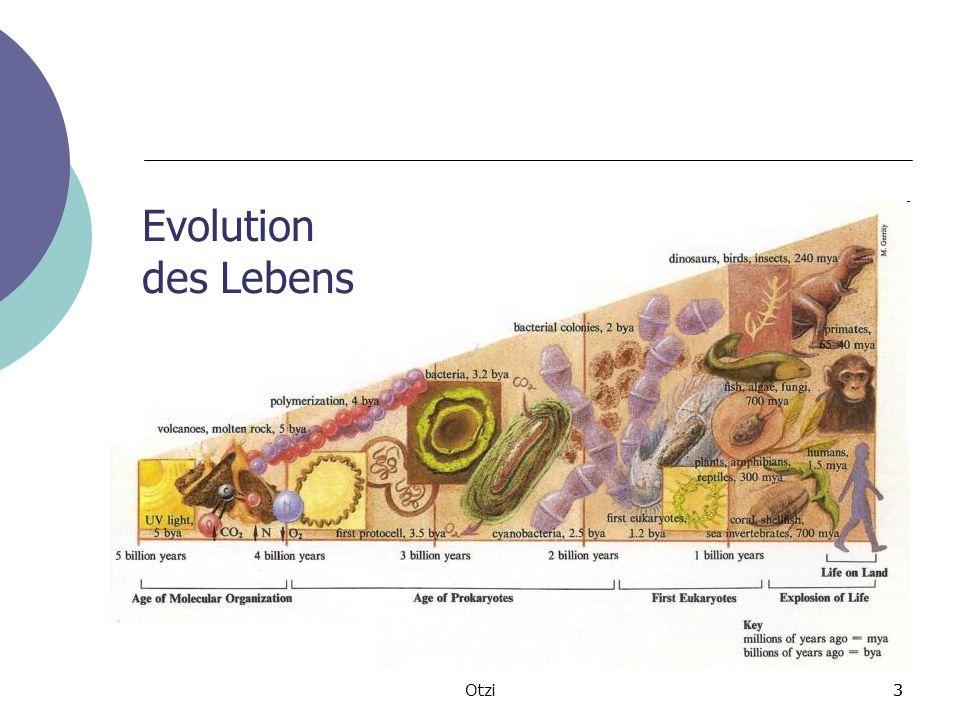 3Otzi3 Evolution des Lebens