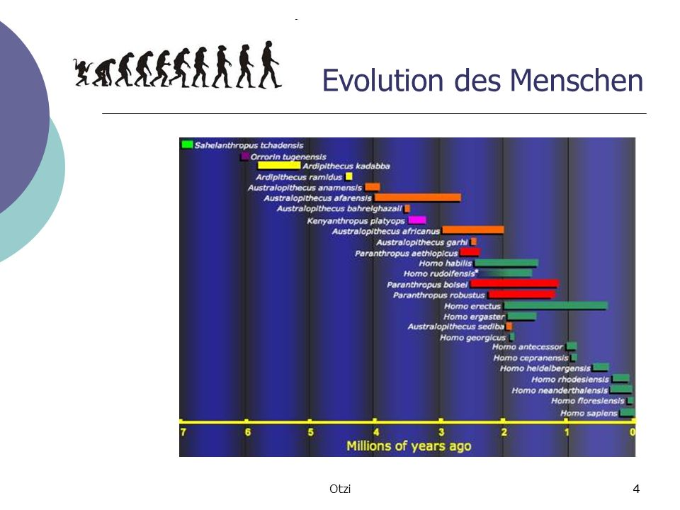 4Otzi4 Evolution des Menschen