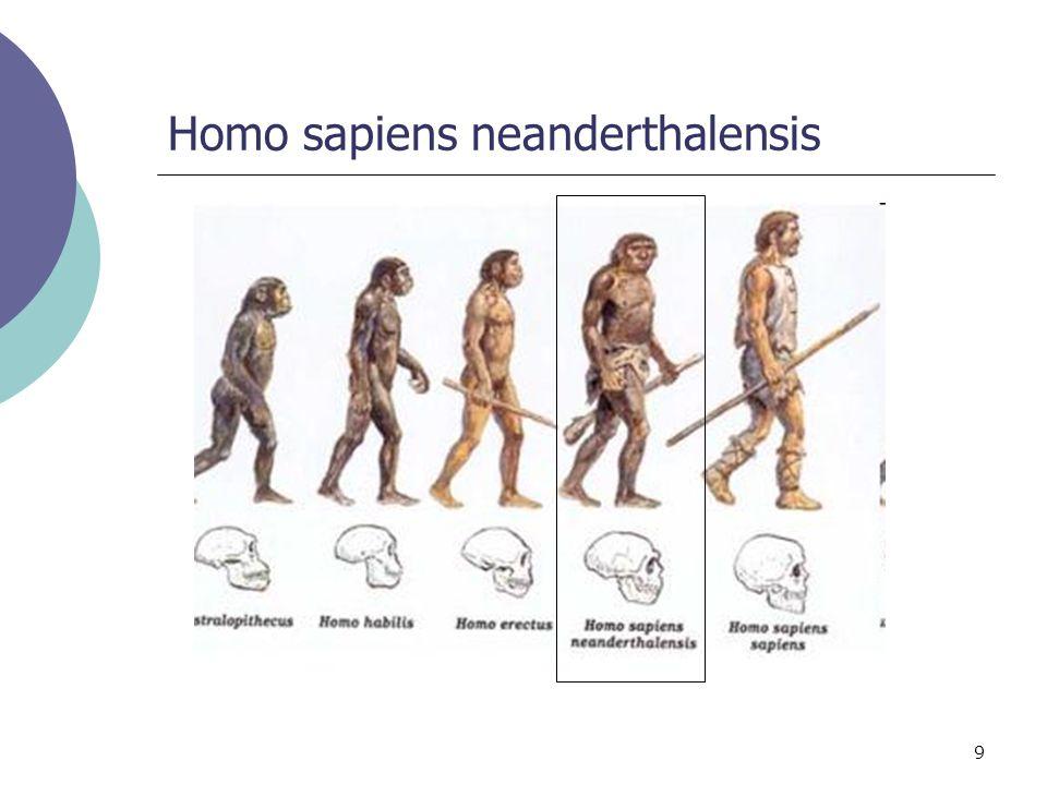 9 Homo sapiens neanderthalensis