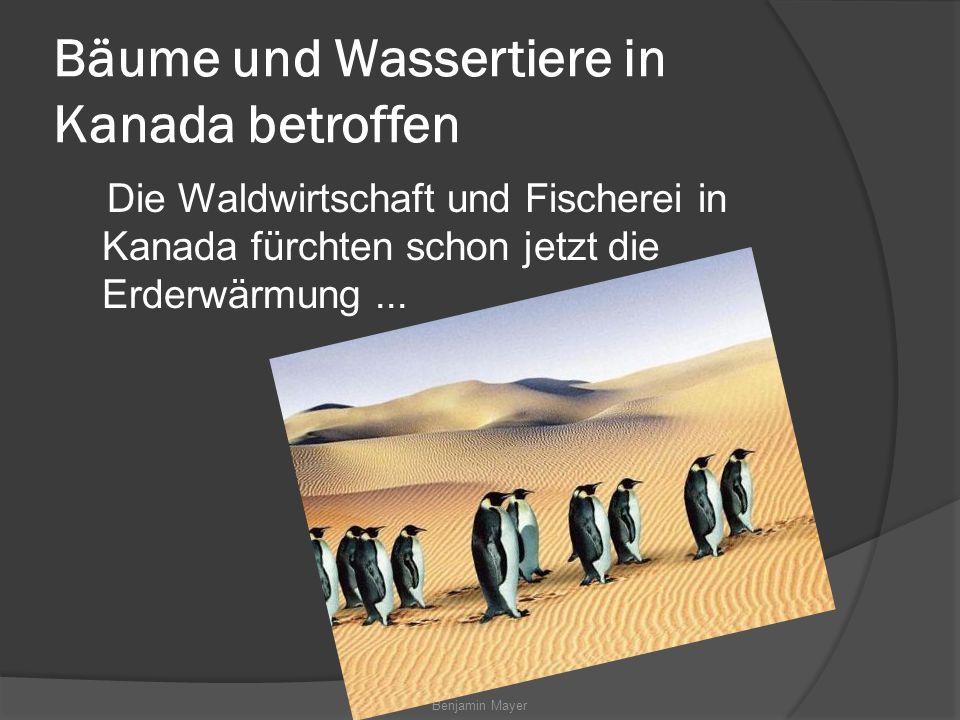 Benjamin Mayer Bäume und Wassertiere in Kanada betroffen Die Waldwirtschaft und Fischerei in Kanada fürchten schon jetzt die Erderwärmung...