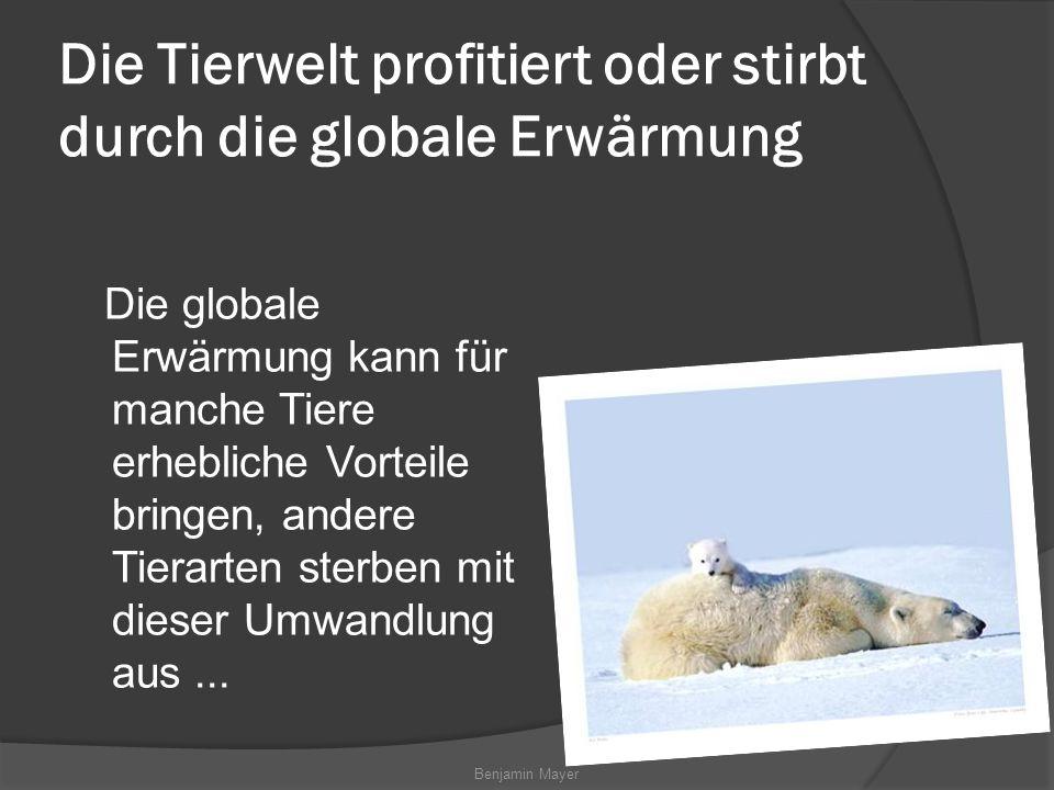 Benjamin Mayer Die Tierwelt profitiert oder stirbt durch die globale Erwärmung Die globale Erwärmung kann für manche Tiere erhebliche Vorteile bringen, andere Tierarten sterben mit dieser Umwandlung aus...