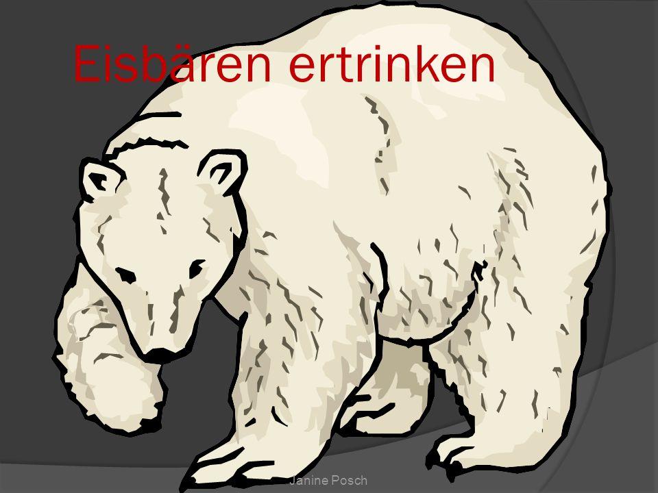Janine Posch Eisbären ertrinken