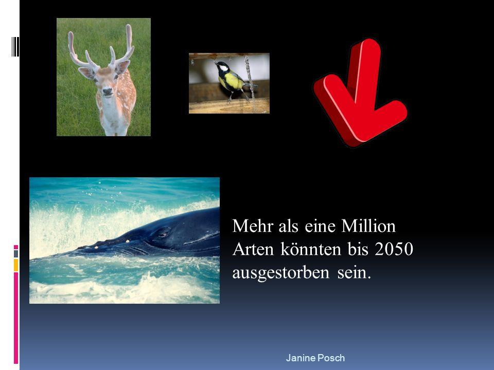 Janine Posch Mehr als eine Million Arten könnten bis 2050 ausgestorben sein.