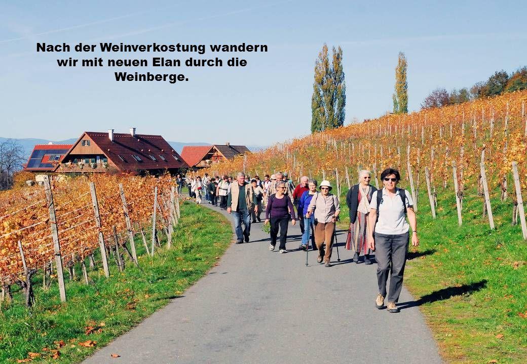 Nach der Weinverkostung wandern wir mit neuen Elan durch die Weinberge.