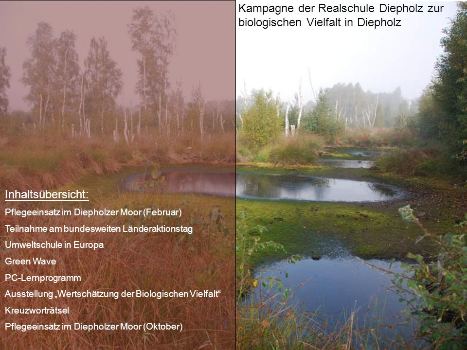 Kampagne der Realschule Diepholz zur biologischen Vielfalt in Diepholz Inhaltsübersicht: Pflegeeinsatz im Diepholzer Moor (Februar) Teilnahme am bunde