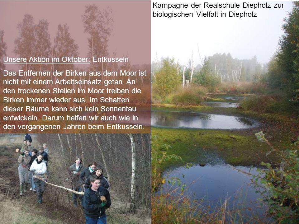 Kampagne der Realschule Diepholz zur biologischen Vielfalt in Diepholz Unsere Aktion im Oktober: Entkusseln Das Entfernen der Birken aus dem Moor ist