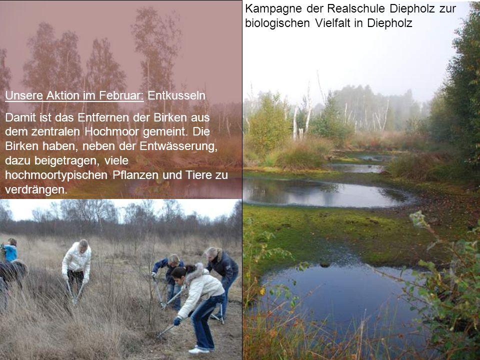Kampagne der Realschule Diepholz zur biologischen Vielfalt in Diepholz Unsere Aktion im Februar: Entkusseln Damit ist das Entfernen der Birken aus dem