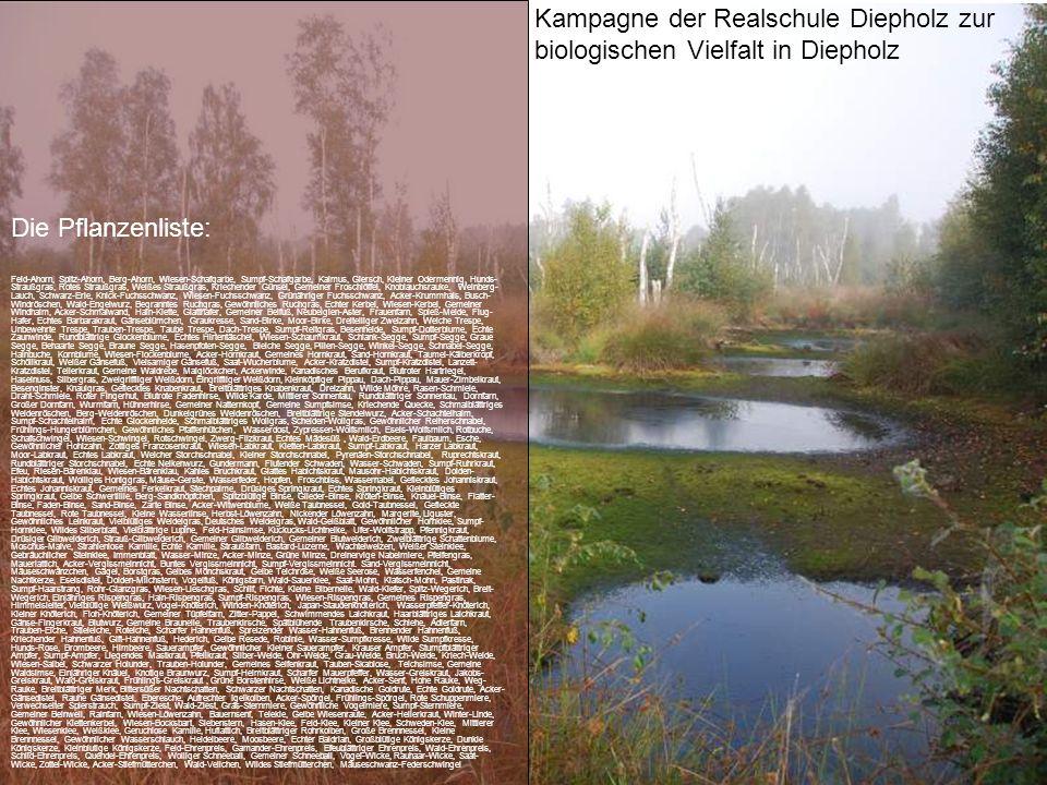 Kampagne der Realschule Diepholz zur biologischen Vielfalt in Diepholz Die Pflanzenliste: Feld-Ahorn, Spitz-Ahorn, Berg-Ahorn, Wiesen-Schafgarbe, Sump