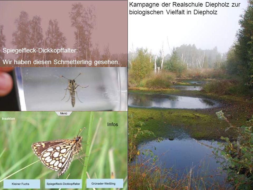 Kampagne der Realschule Diepholz zur biologischen Vielfalt in Diepholz Spiegelfleck-Dickkopffalter: Wir haben diesen Schmetterling gesehen.