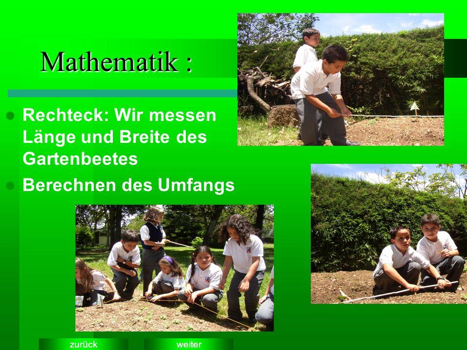 weiterzurück Mathematik : Rechteck: Wir messen Länge und Breite des Gartenbeetes Berechnen des Umfangs