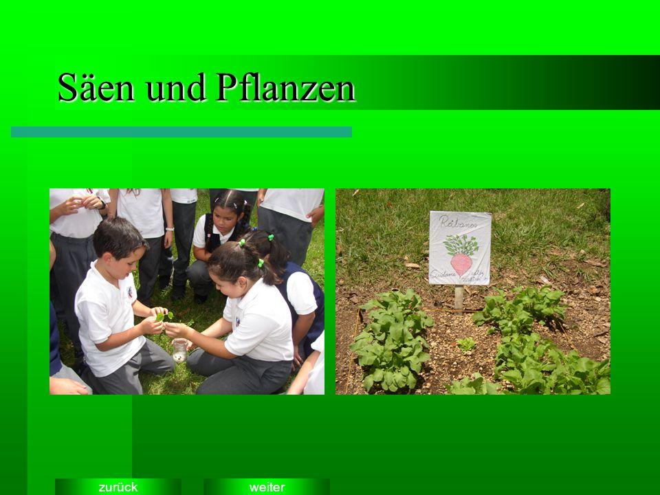 weiterzurück Säen und Pflanzen
