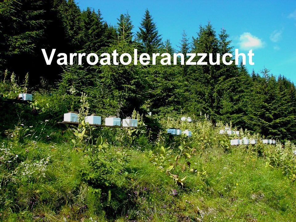 Arbeitsgruppe Varroatoleranzzucht der Carnica IM WL Wilma Scherjau2 IM Ing.