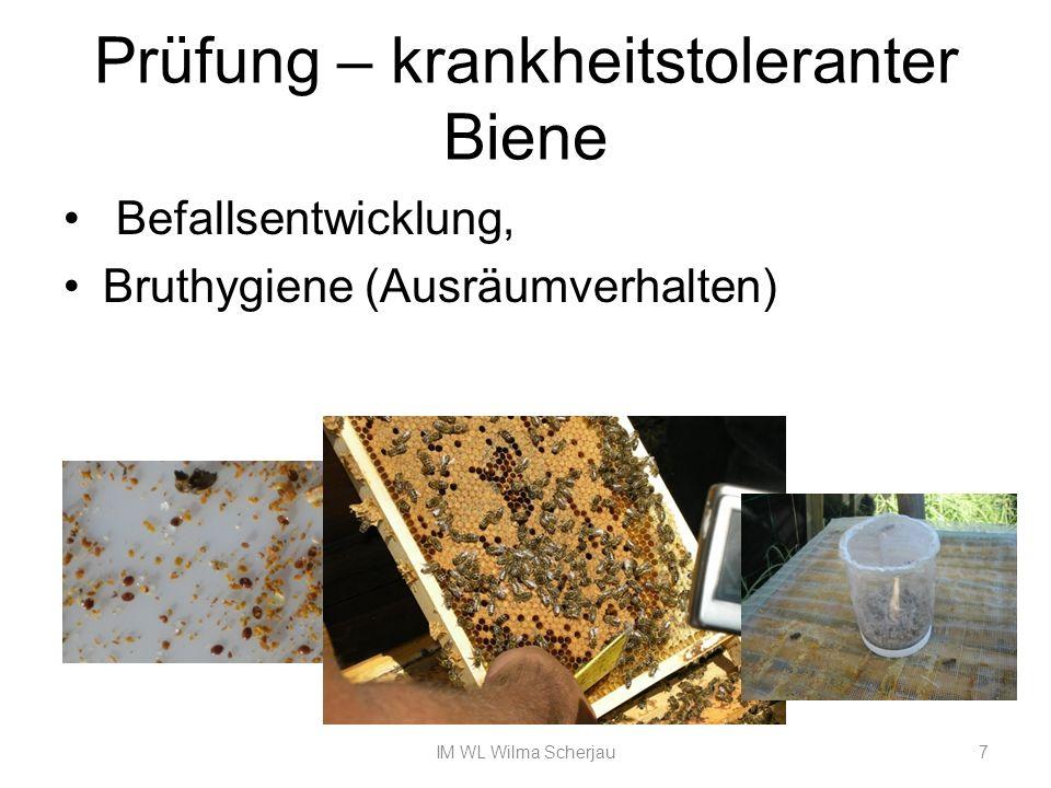 Varroatoleranz Februar/März (Salweidenblüte) natürlicher Milbenabfall über 3Wochen auszählen Kein Drohnenschnitt April/Juli Nadeltest mehrmals ausführen Juli Entnahme von Bienenproben (Befallsmessung mit Staubzucker) IM WL Wilma Scherjau8