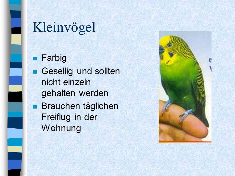 Kleinvögel n Farbig n Gesellig und sollten nicht einzeln gehalten werden n Brauchen täglichen Freiflug in der Wohnung