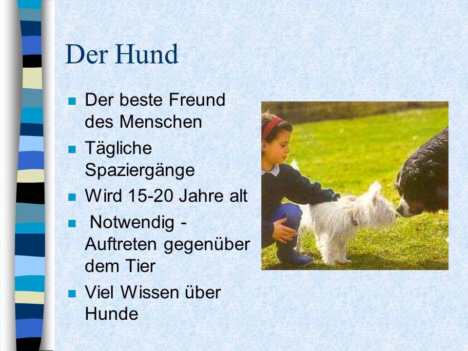Der Hund n Der beste Freund des Menschen n Tägliche Spaziergänge n Wird 15-20 Jahre alt n Notwendig - Auftreten gegenüber dem Tier n Viel Wissen über Hunde