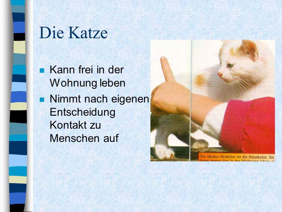 Die Katze n Kann frei in der Wohnung leben n Nimmt nach eigenen Entscheidung Kontakt zu Menschen auf