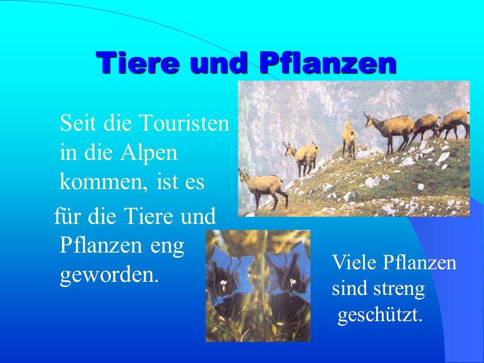 Für die Urlauber wurden Hotels, Wanderwege, Bergbahnen, Skilifte und Schlittelwege gebaut. Situation in den Alpen