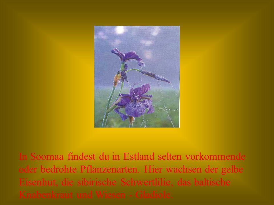In Soomaa finden Zuflucht verschiedene Vogelarten: Schwarzstorch, Steinadler, Kranich, Moorhuhn, Auerhhuhn, Schreiadler.