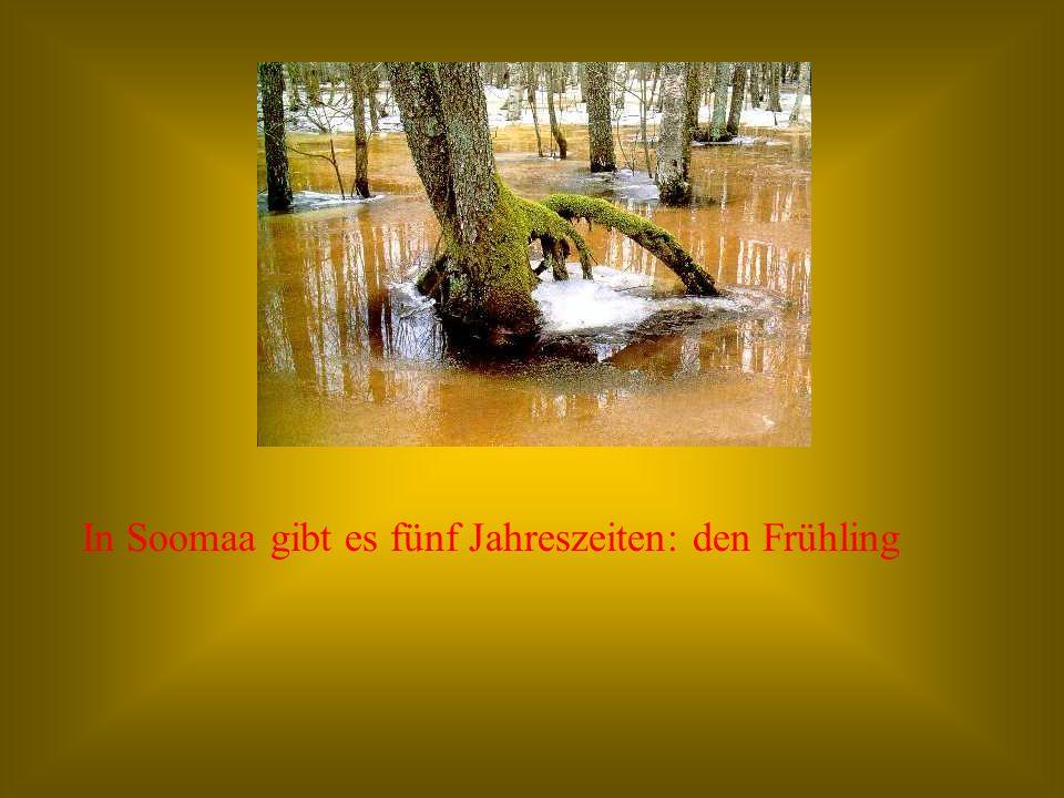 In Soomaa gibt es fünf Jahreszeiten: den Frühling