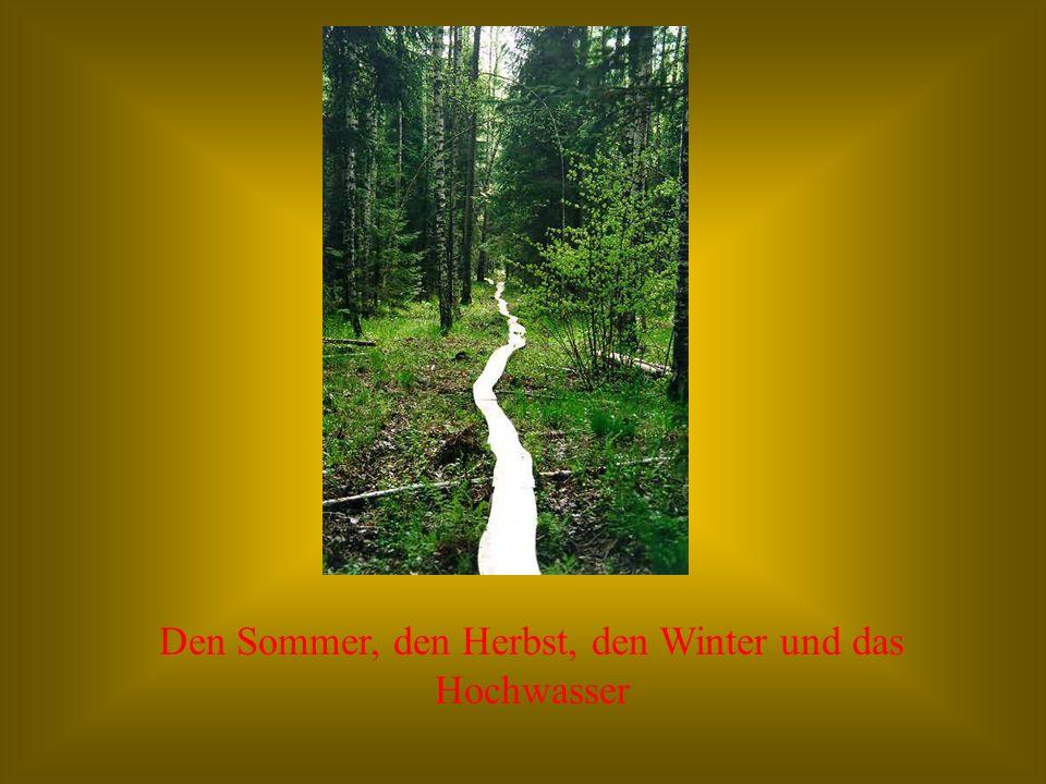 Den Sommer, den Herbst, den Winter und das Hochwasser