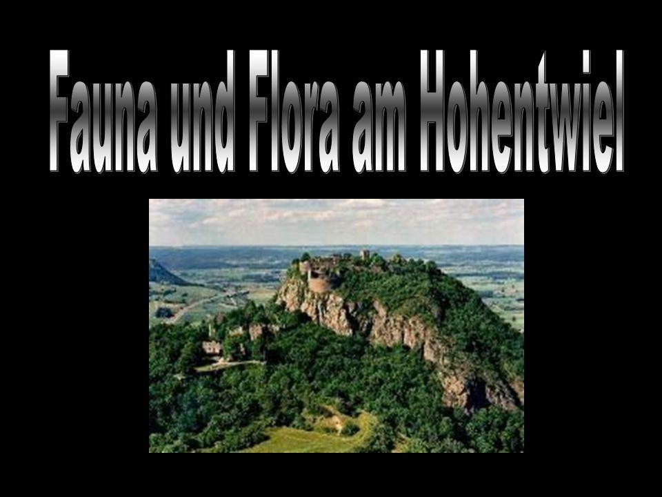 Protokoll von Iris, Stephanie, Damaris / Flora und Fauna / Juni 2006 Protokoll erstellt von Iris Hutter, Stephanie Huber, Damars Läubli, 1Ma Protokoll von Iris, Stephanie, Damaris / Flora und Fauna / Juni 2006