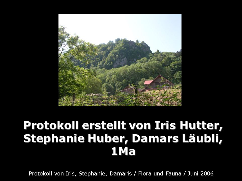 Protokoll von Iris, Stephanie, Damaris / Flora und Fauna / Juni 2006 Protokoll erstellt von Iris Hutter, Stephanie Huber, Damars Läubli, 1Ma Protokoll