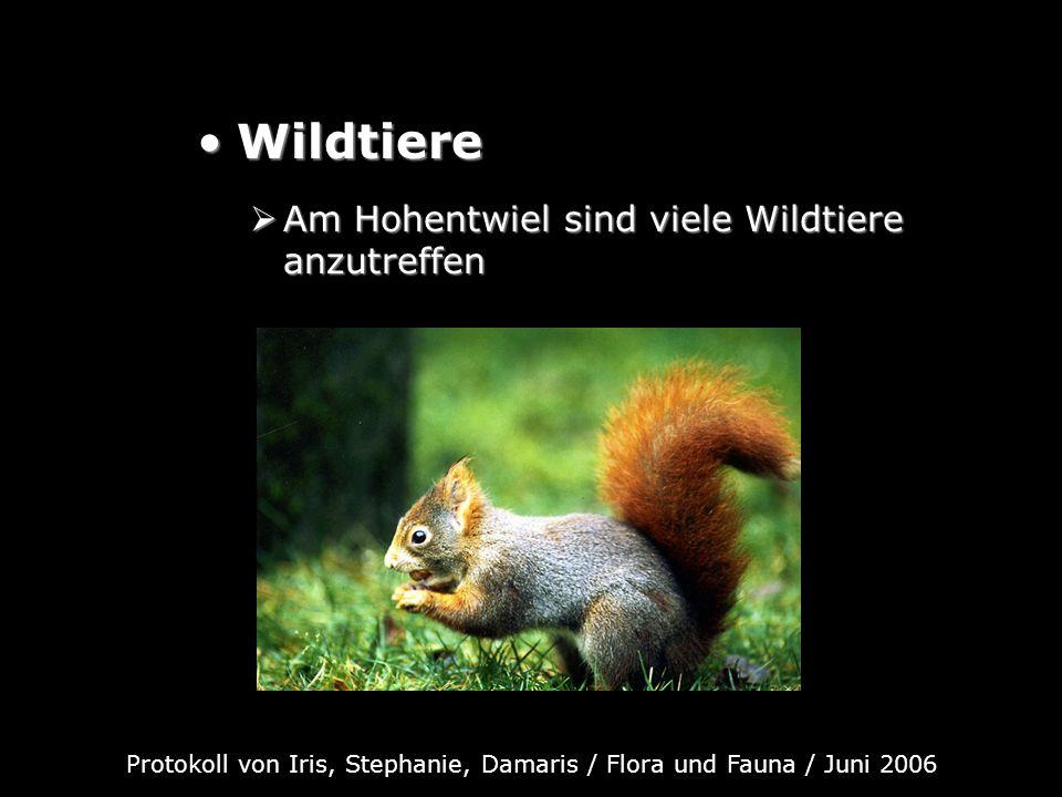 WildtiereWildtiere Am Hohentwiel sind viele Wildtiere anzutreffen Am Hohentwiel sind viele Wildtiere anzutreffen Protokoll von Iris, Stephanie, Damari