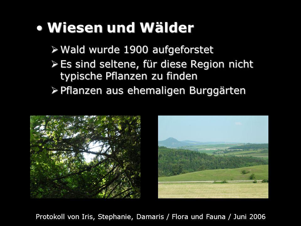 Wiesen und WälderWiesen und Wälder Wald wurde 1900 aufgeforstet Wald wurde 1900 aufgeforstet Es sind seltene, für diese Region nicht typische Pflanzen