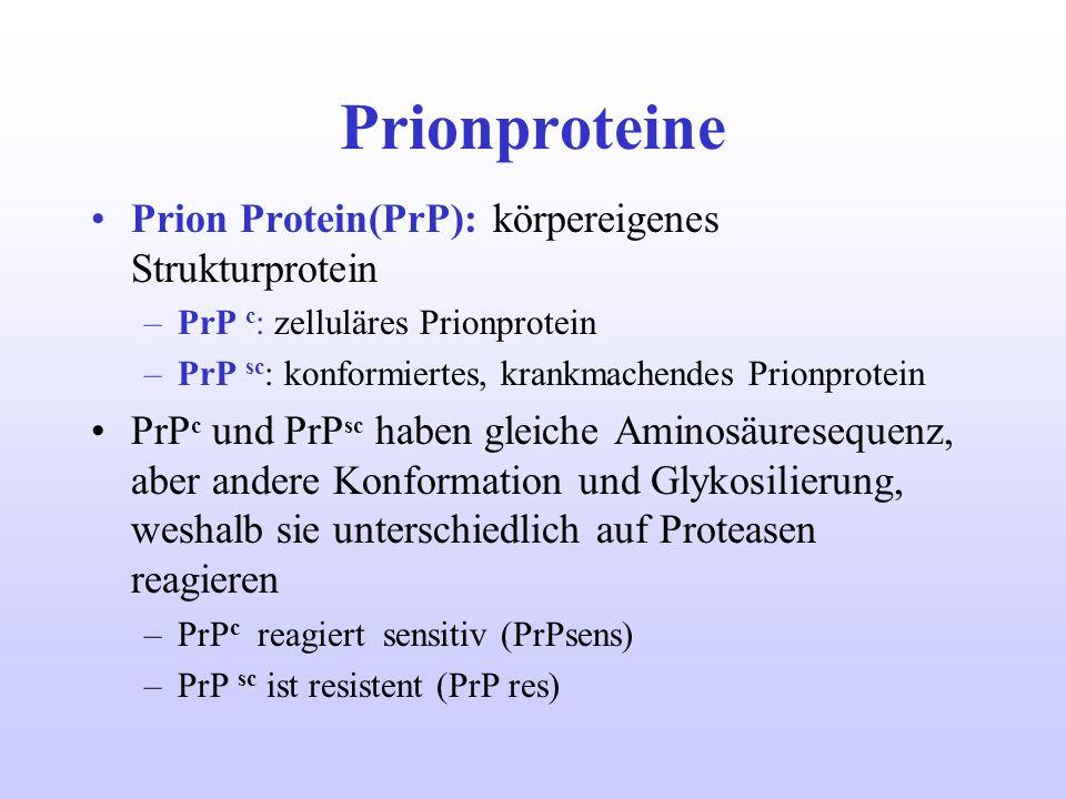 Prionproteine Prion Protein(PrP): körpereigenes Strukturprotein –PrP c : zelluläres Prionprotein –PrP sc : konformiertes, krankmachendes Prionprotein
