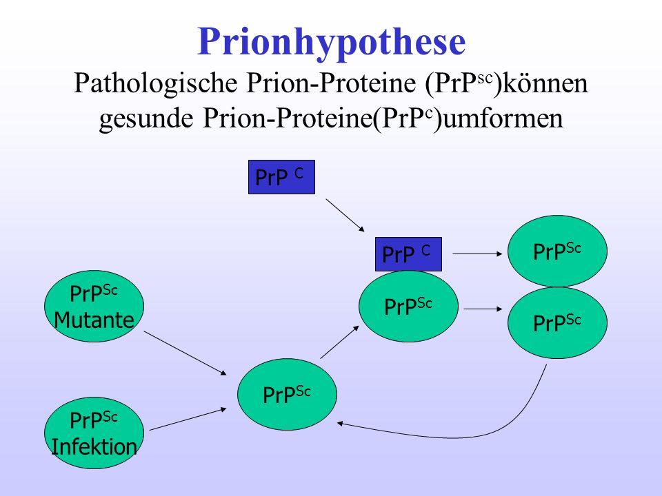 Prionhypothese Pathologische Prion-Proteine (PrP sc )können gesunde Prion-Proteine(PrP c )umformen PrP C PrP Sc PrP C PrP Sc Mutante PrP Sc Infektion
