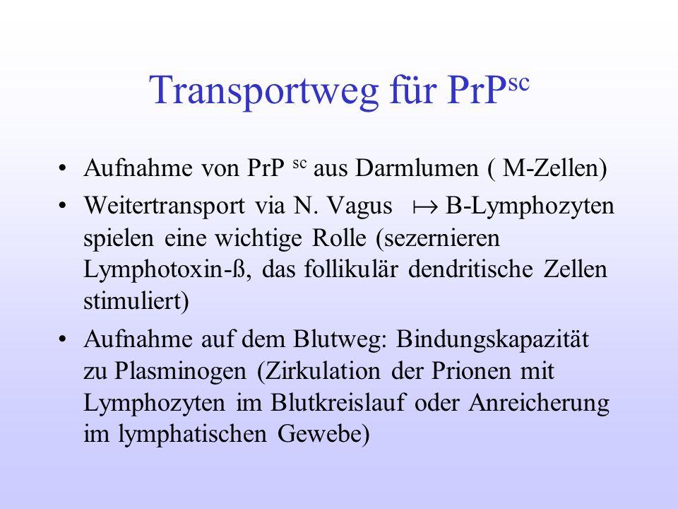 Transportweg für PrP sc Aufnahme von PrP sc aus Darmlumen ( M-Zellen) Weitertransport via N. Vagus B-Lymphozyten spielen eine wichtige Rolle (sezernie