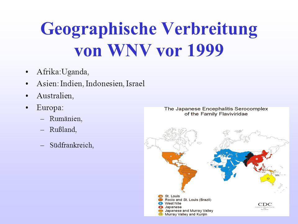 Geographische Verbreitung von WNV vor 1999 Afrika:Uganda, Asien: Indien, Indonesien, Israel Australien, Europa: –Rumänien, –Rußland, –Südfrankreich,