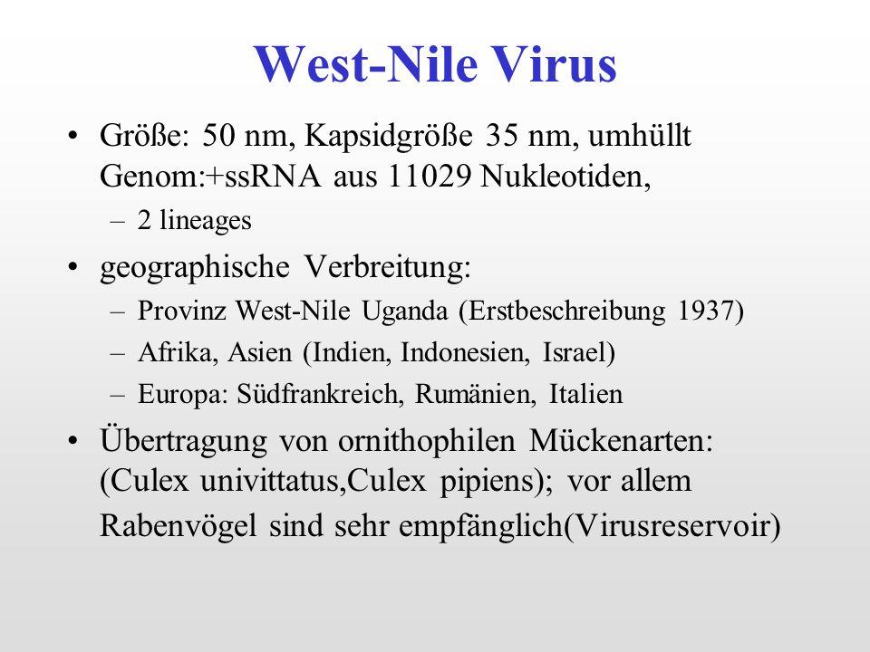 West-Nile Virus Größe: 50 nm, Kapsidgröße 35 nm, umhüllt Genom:+ssRNA aus 11029 Nukleotiden, –2 lineages geographische Verbreitung: –Provinz West-Nile