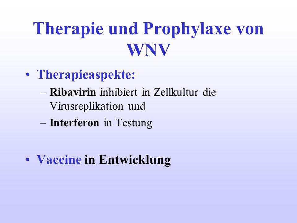 Therapie und Prophylaxe von WNV Therapieaspekte: –Ribavirin inhibiert in Zellkultur die Virusreplikation und –Interferon in Testung Vaccine in Entwick