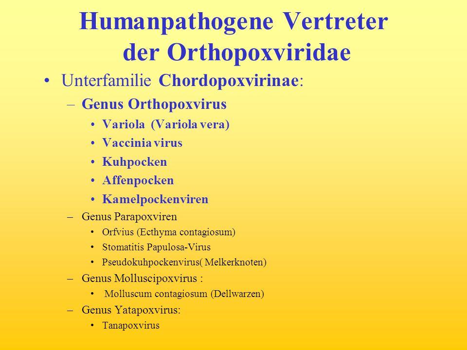 Humanpathogene Vertreter der Orthopoxviridae Unterfamilie Chordopoxvirinae: –Genus Orthopoxvirus Variola (Variola vera) Vaccinia virus Kuhpocken Affen