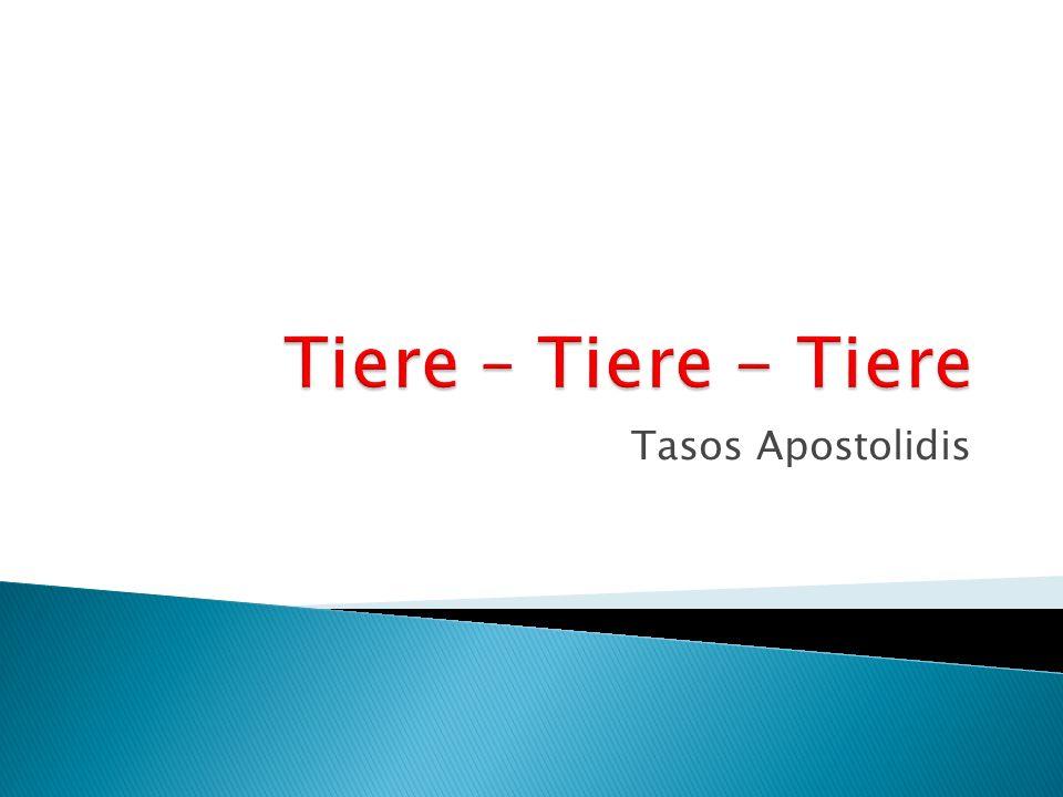 Tasos Apostolidis
