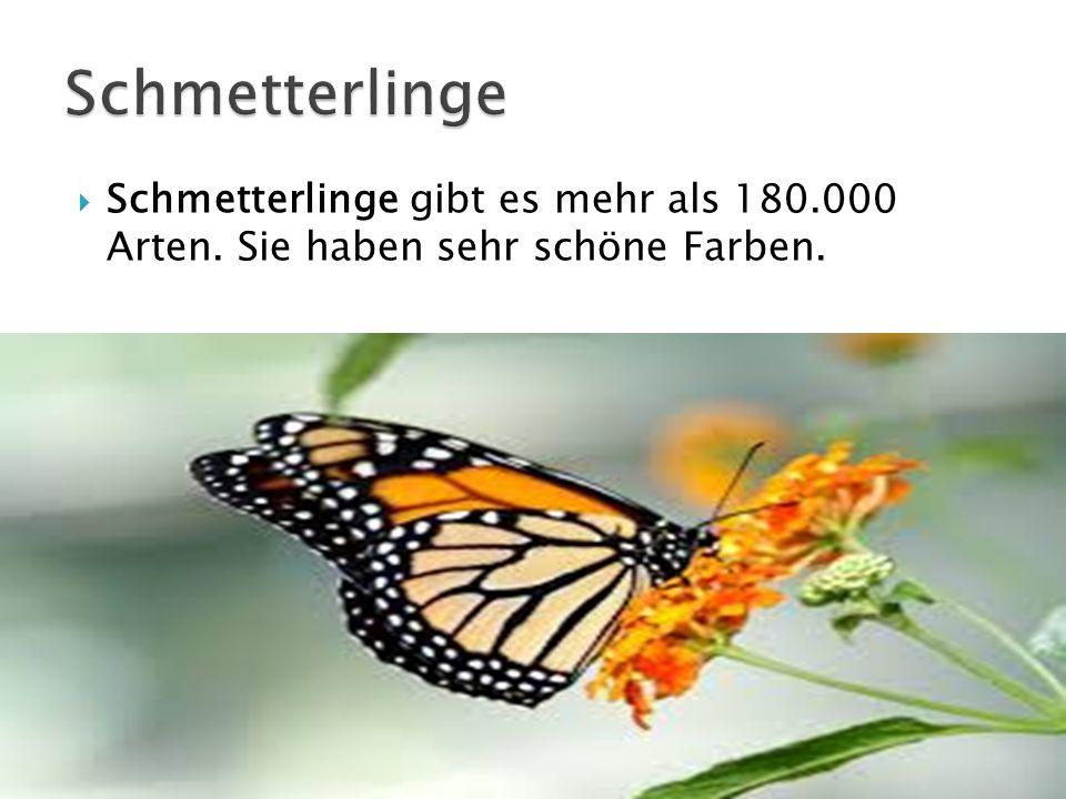 Schmetterlinge gibt es mehr als 180.000 Arten. Sie haben sehr schöne Farben.